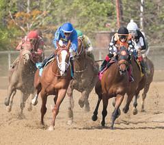 2018 Pimlico Race track (112) (maskirovka77) Tags: pimlico dirt mare race racehorse threeyearold turf yearling