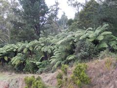 Rotorua countryside (VJ Photos) Tags: hardison newzealand rotorua