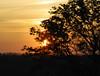Dream A Little Dream (John Neziol) Tags: jrneziolphotography portrait sunset sunshine sunlight landscape brantford beautiful bright tree trees outdoor nikon nikoncamera nature nikondslr nikond80 naturallight evening photography sky dusk