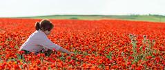 _DSC8605 (JuanCarlossony) Tags: gente mujer flores amapolas sony 70300mm tamron slta58