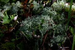 OpalHiills00017 (jahNorr) Tags: summertrip 2012 fungilichen canadaalbertajaspernationalparkopalhills