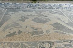 Villa of Dionysus (Dionysos), Deer Hunt Mosaic (1).JPG (tobeytravels) Tags: alexanerthegreat alexander3rd philip11 macedon macedonia herodotusofhalicarnassus xerxes thucydides archelaus amyntas zeuxis timotheusofmiletus roman egnatia colony hippodamian phacos pebble