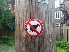 No Dogs :( (Coastal Elite) Tags: chien poop dog pets interdiction warning avertissement prohibition prohibit sign affiche enseigne signe interdit dont dogs chiens pet animals city life animal rules règlement screwed telephone pole poteau mileend alley north parc avenue montreal ruelles ruelle alleys alleyway alleyways walking mile end montréal