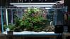 Interzoo 2018 (viktorlantos) Tags: aquascaping aquascape aquariumplants aquarium plantedaquarium plantedtank interzoo2018 tradefair