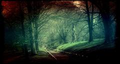 Park .. (Julie Greg) Tags: park nature colours canon5dmarkiv way