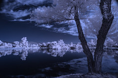 Infrared Reflections At Santee Lakes (Bill Gracey 18 Million Views) Tags: infrared infraredphotography ir convertedinfraredcamera santeelakes santee highcontrast reflections trees clouds vegetation