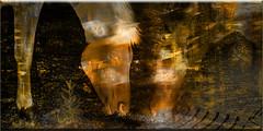 Pastando (seguicollar) Tags: imagencreativa photomanipulación art arte artecreativo artedigital virginiaseguí caballos pasto dorado