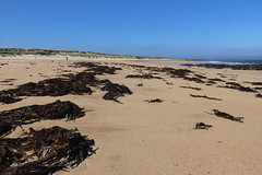 St Combs Beach_may 18_639 (Alan Longmuir.) Tags: stcombsbeach grampian aberdeenshire stcombs