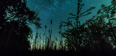 Nature's Silhouette (ruifo) Tags: nikon d810 bower 14mm f28 if ed umc ultra wide angle astro astrofotografia astrofotografía astrophotography night noche noite battle creek mi michigan us usa low light long exposure nature naturaleza natureza silhouette silueta plantas plants trees cattail