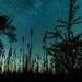 Nature's Silhouette