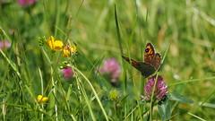 Good feelings (paninho) Tags: papillons butterfly borboletas verde vert green fleurs flowers flores