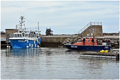 Encore au port ! (sokek) Tags: chat mer ocan bateau port marin