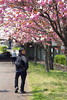 jaron under plum tree (kaphentso) Tags: niigata plumtree shinanoriver hakusanpark hakusan japan