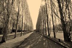 avenue (rafasmm) Tags: berlin germany monochrome avenue tree park outdoor sepia nikon d90 sigma 1020 ex walk abigfave