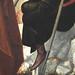 CARPACCIO Vittore,1514 - La Prédication de Saint Etienne à Jérusalem (Louvre) - Detail 175