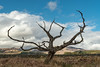 My new old tree. (Mark McKie) Tags: galloway gallowayforestpark gallowayhills minnigaffhills minnigaff newtonstewart penkiln penkilnburn cree tree nikon nikonphotography nikond7500 bluesky lonetree scotland scottishlowlands scottish clouds cloudy drystonedyke drystonewall dyke