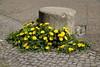 Blumeninsel / Dandelion Island (Sockenhummel) Tags: behmstrasse löwenzahn dandelion strasse insel blüten steine berlin fuji xt10 island poller wedding