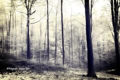 2018-4-17 Muziekbos Ronse 250 a (Jacques Sper) Tags: bos forest outdoor bw ronse muziekbos