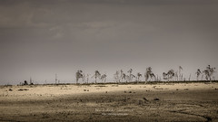 the ghost trees (ylemort) Tags: nature landscape desert tree scenics dry sky outdoors nopeople africa beautyinnature wildernessarea sand drought aridclimate ruralscene namibia tranquilscene sanddune barren everypixel canon canon5dmkiv belgique belgium beautiful