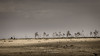 the ghost trees (ylemort) Tags: nature landscape desert tree scenics dry sky outdoors nopeople africa beautyinnature wildernessarea sand drought aridclimate ruralscene namibia tranquilscene sanddune barren everypixel canon canon5dmkiv belgique belgium beautiful