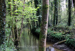 Tintern Stream (Ken Meegan) Tags: tinternstream tinternwoods tinternabbey saltmills cowexford ireland 652018 stream wood trees tinterntrails