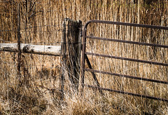 In Between Light and Shadows (HFF) (13skies) Tags: hff happyfencefriday fence gate road countryside alone grasses post fenceposts wirefence sony fencefriday