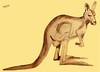 Kangaroo-01 (Marianne Cornelissen-Kuyt) Tags: tekening drawing dessin zeichnung prelievo potlood pencil crayon bleistift lápiz matita kangoeroe kangaroo kangourou känguru canguro schets