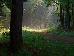 P1100193 (OdenWALDfotograf) Tags: wald westerwald sunbeams forest summer sommer