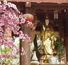 Cherry blossom at the temple (Hammerhead27) Tags: worship beauty holy gold red temple pagoda vietnam pink flowers cherryblossoms