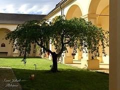 11 - LORETTOMI BAZILIKA udvara / Nádvorie BAZILIKY V LORETTO / Fotó: Podobek Erzsébet