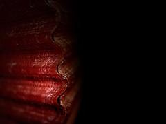 Red Shell / Conchiglia Rossa (Giorgio Ghezzi) Tags: lowkey macromondays shell conchiglia red rosso giorgioghezzi