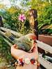 ○● Vivido y colorido como es la vida.●○ (ivethmendez86) Tags: pajaro ave figura colorful colors flor flower garden pretty cute bird colour composition composición pulsera