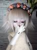 Eos (Munchi-chan) Tags: bjd abjd doll soom silky