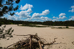 start of the summer (mby.photography) Tags: sand dunes forest tree sky cloud cloudy nikon d600 netherlands holland