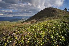 DSC00948 (kyleddsn) Tags: hiking utah ogden spring