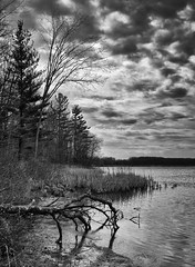 By the lake (Hadoland) Tags: fujifilm x100s fujixseries fuji photography bnw bw lake nature naturephotography clouds trails metroparks michigan branch water reeds reflection