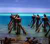 Sittin' On The Dock Of The Bay (Danny Shrode) Tags: birds water blue outdoor ocean sea drytortugasnationalpark