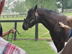Orb (atthepaddock) Tags: thoroughbred claiborne orb picturesofhorses