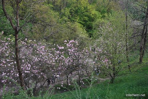 Ботанічний сад імені Гришка Цвітуть магнолії InterNetri  Ukraine 194