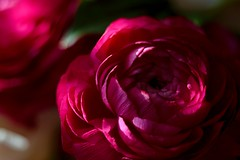 DSC_0597 (benji86cz) Tags: flower helios44m oldlens manualfocus helios bokeh