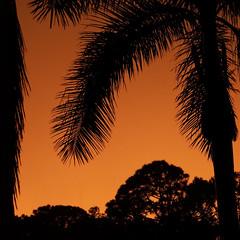 Sunset in Sarasota (soniaadammurray - On & Off) Tags: digitalphotography sunset sky exterior trees orange nature sarasota florida usa quartasunset artchallenge