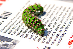 Гусеница на книге