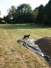 PICT0179 (wickenpedia) Tags: archaeology cat mog timeteam wicken wwwwickenarchaeologyorguk leocassandramcneir