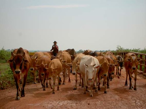 Camboya: crisol de culturas