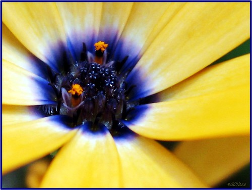 flower by silviaON.