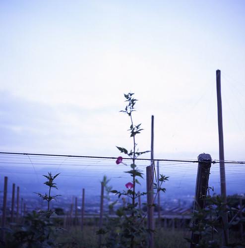 Kofu basin: Fuji ver.