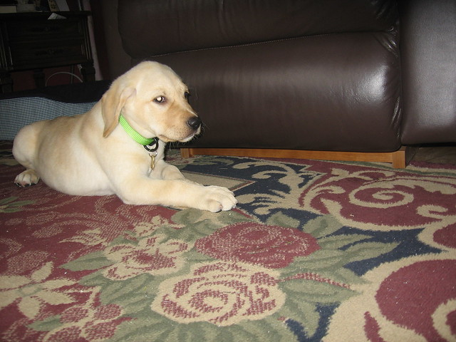 Mulligan (New Puppy)
