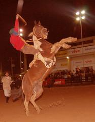 O tobiano capincho (Eduardo Amorim) Tags: brazil horses horse southamerica brasil caballo cheval caballos cavalos pferde cavalli cavallo cavalo gauchos pferd riograndedosul hest hevonen brésil chevaux gaucho 馬 américadosul häst gaúcho 말 amériquedusud лошадь gaúchos 马 sudamérica suramérica américadelsur סוס südamerika expointer esteio jineteada حصان άλογο americadelsud gineteada expointer2006 ม้า americameridionale eduardoamorim ঘোড়া