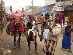 Makar Sankranti (Sirensongs) Tags: musician music india holiday animal festival cow asia bullock trumpet bull instrument horn hindu celebrate folkmusic animalplanet pongal southindia bsb southasia telugu andhrapradesh sirensongs angkorsingle theindiatree lpfest decoratedanimal lpfestasiapacific indologistatlarge