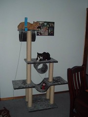 Kia and Raph on Scratching Post 2 (Annie - JTL) Tags: scratchingpost 612monthsold kiaraandraphael